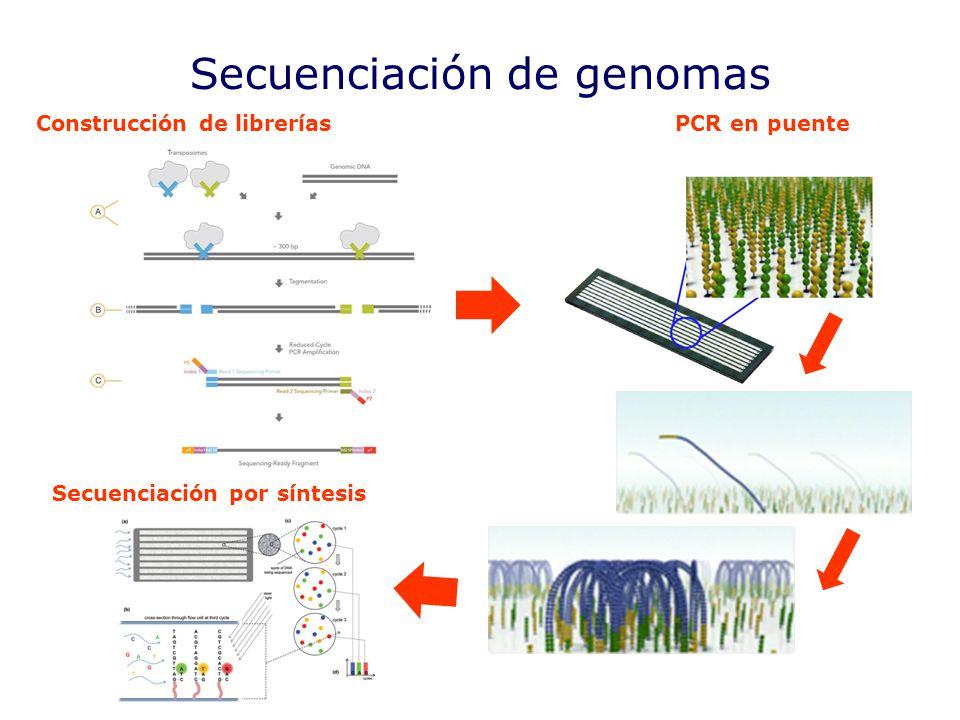 Secuenciación de genomas