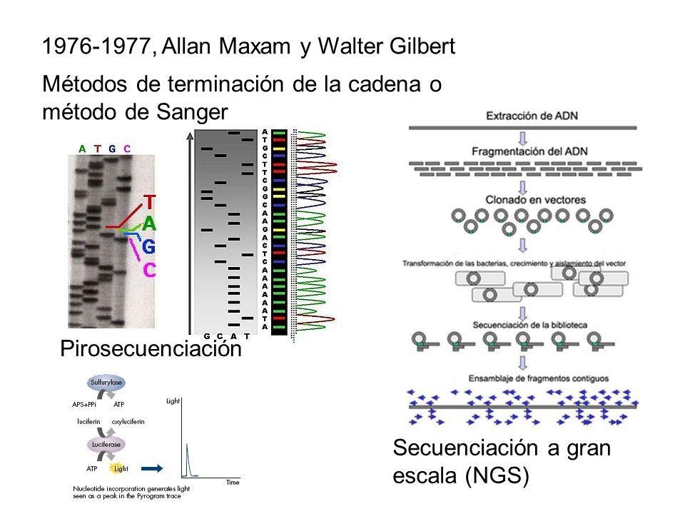 1976-1977, Allan Maxam y Walter Gilbert