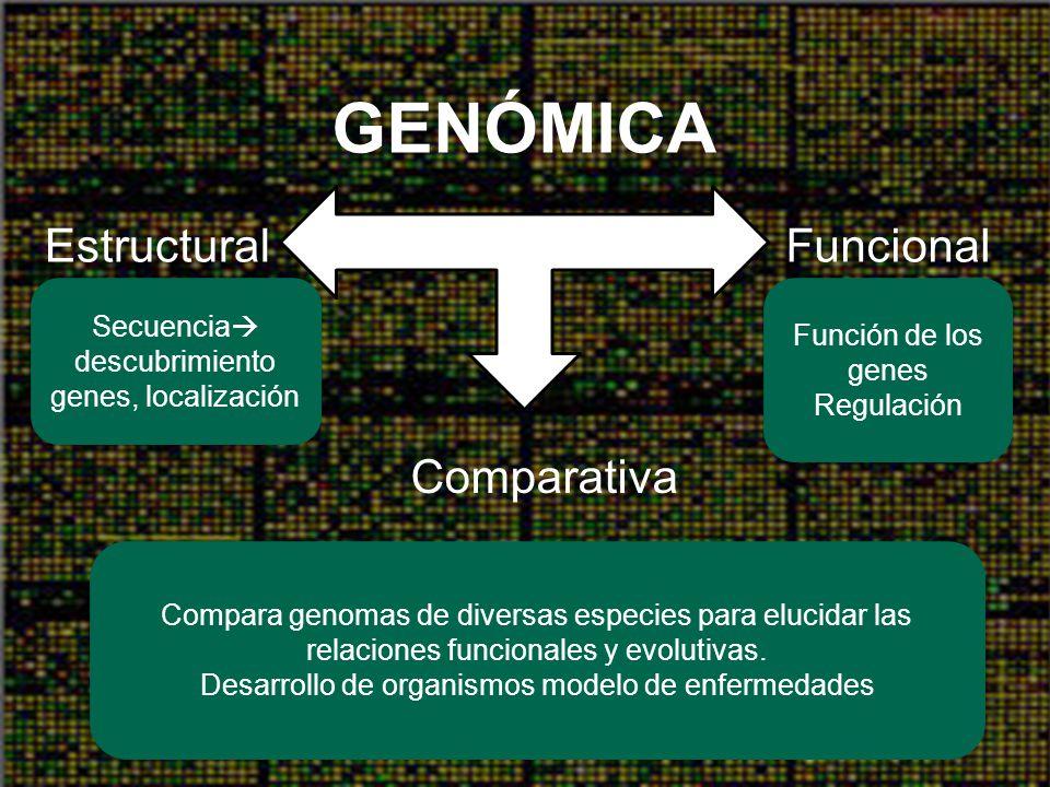 GENÓMICA Estructural Funcional Comparativa