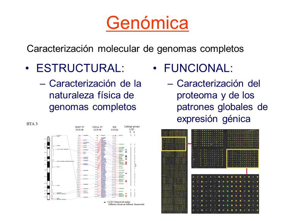 Genómica ESTRUCTURAL: FUNCIONAL: