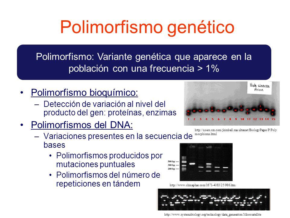 Polimorfismo genético