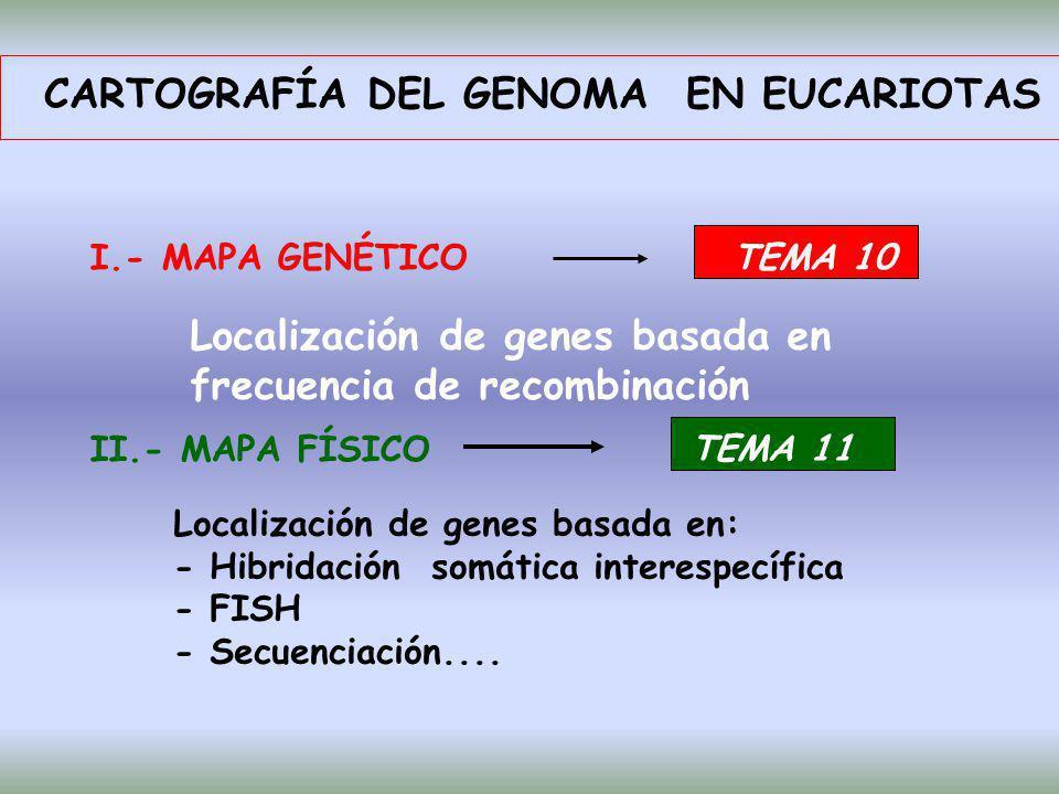 CARTOGRAFÍA DEL GENOMA EN EUCARIOTAS