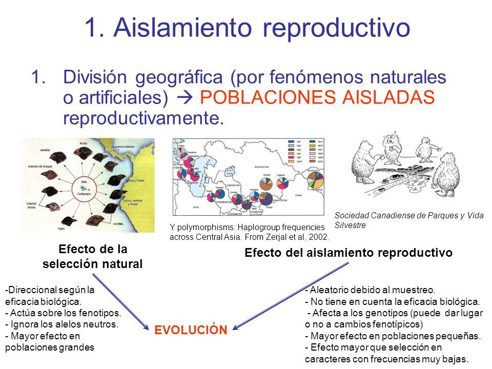 1. Aislamiento reproductivo