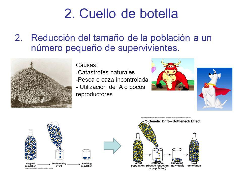 2. Cuello de botella Reducción del tamaño de la población a un número pequeño de supervivientes. Causas: