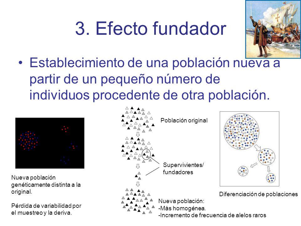 3. Efecto fundador Establecimiento de una población nueva a partir de un pequeño número de individuos procedente de otra población.