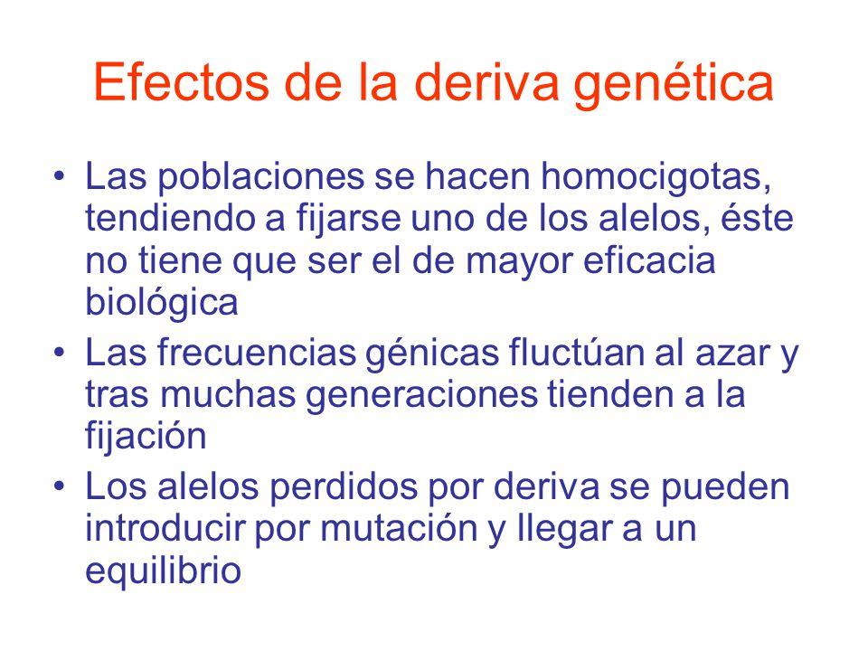 Efectos de la deriva genética