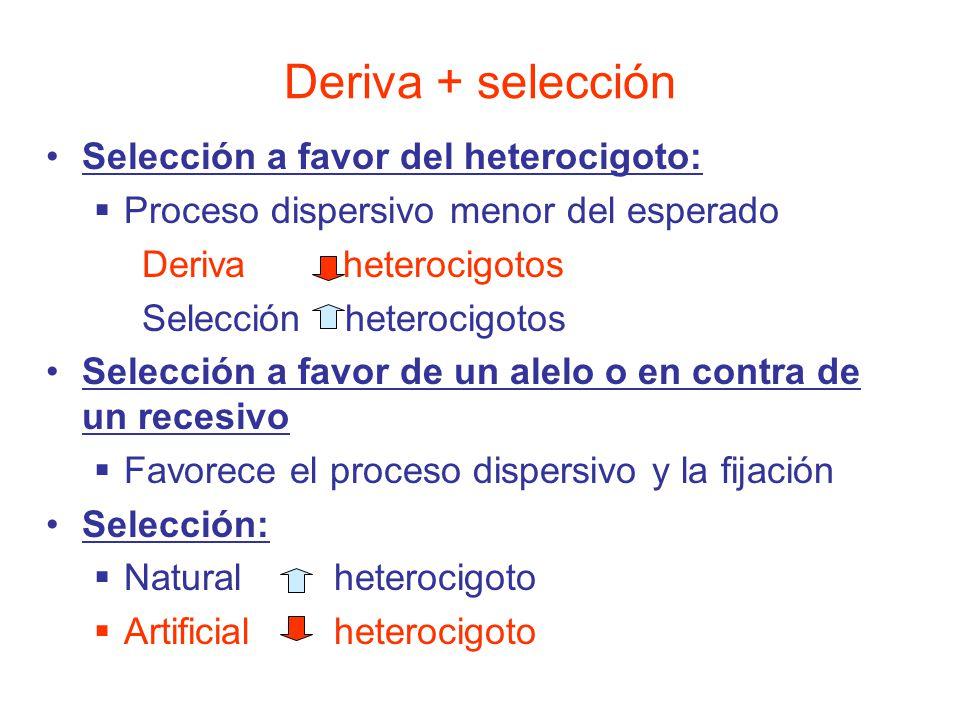 Deriva + selección Selección a favor del heterocigoto: