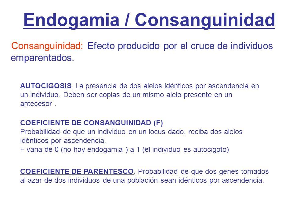 Endogamia / Consanguinidad