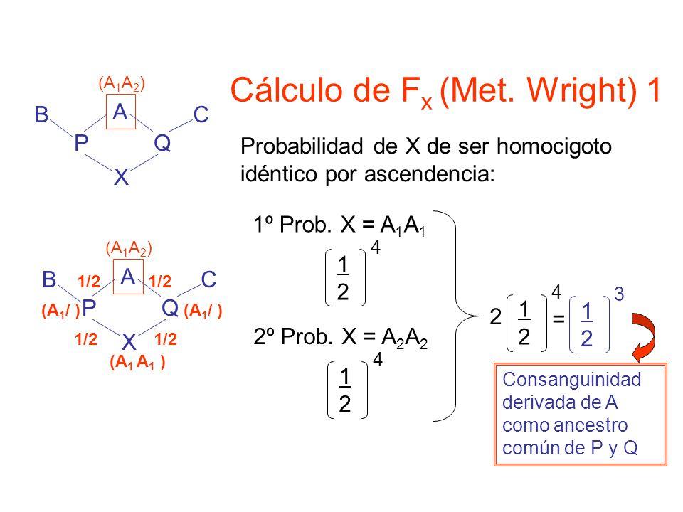 Cálculo de Fx (Met. Wright) 1