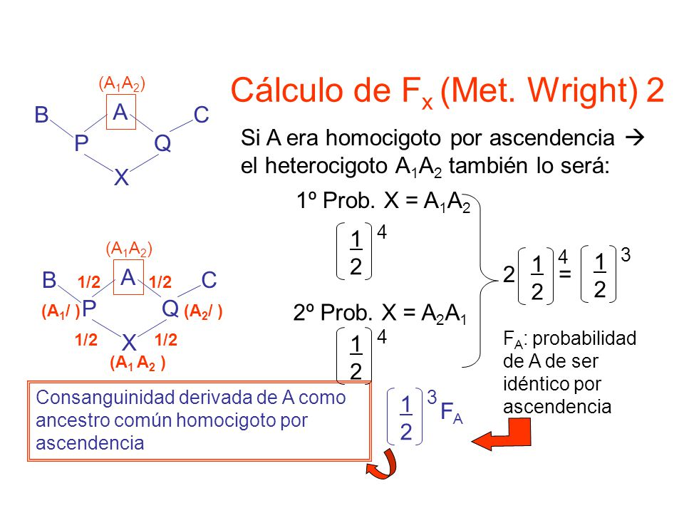 Cálculo de Fx (Met. Wright) 2