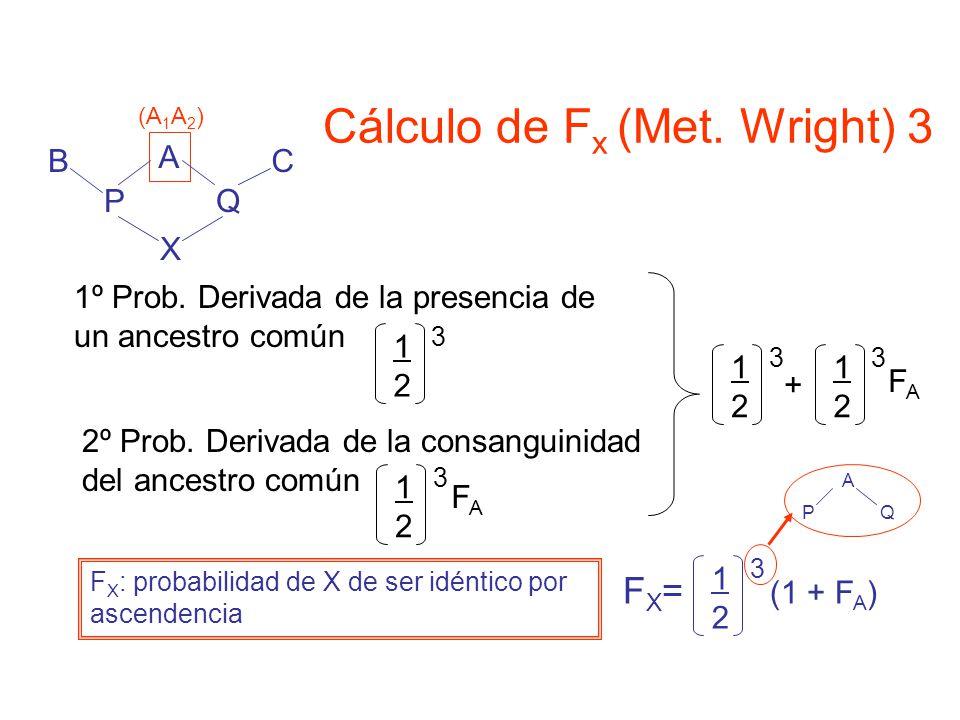 Cálculo de Fx (Met. Wright) 3