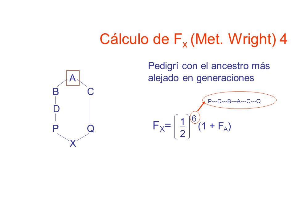 Cálculo de Fx (Met. Wright) 4