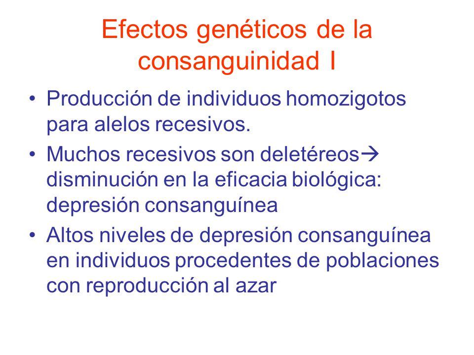 Efectos genéticos de la consanguinidad I