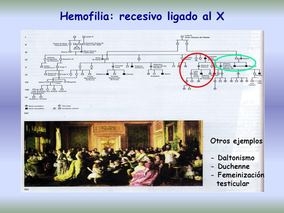 Hemofilia: recesivo ligado al X