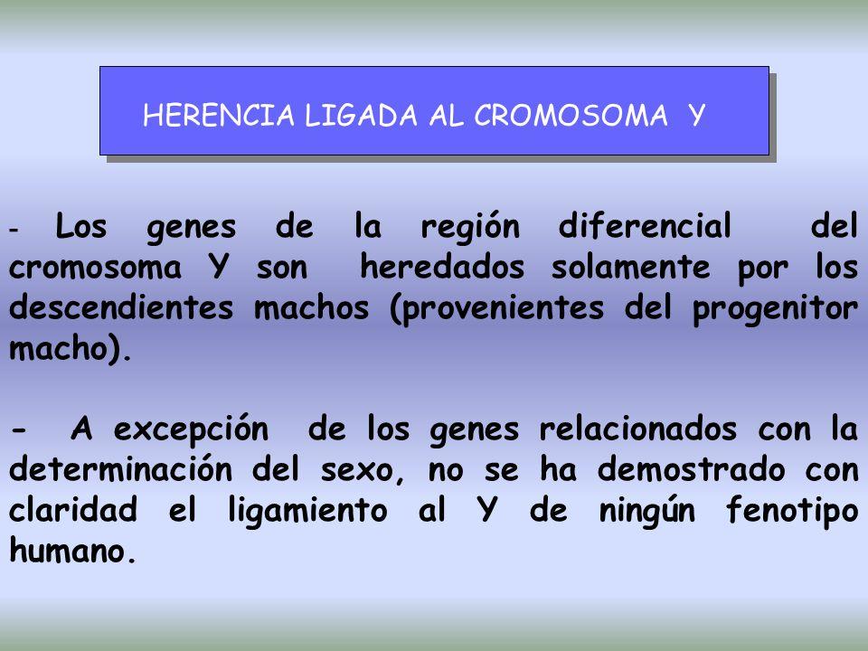 HERENCIA LIGADA AL CROMOSOMA Y