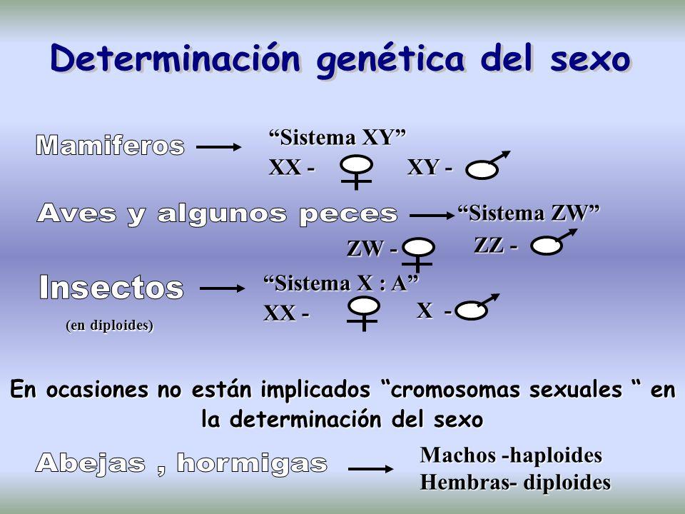 Determinación genética del sexo