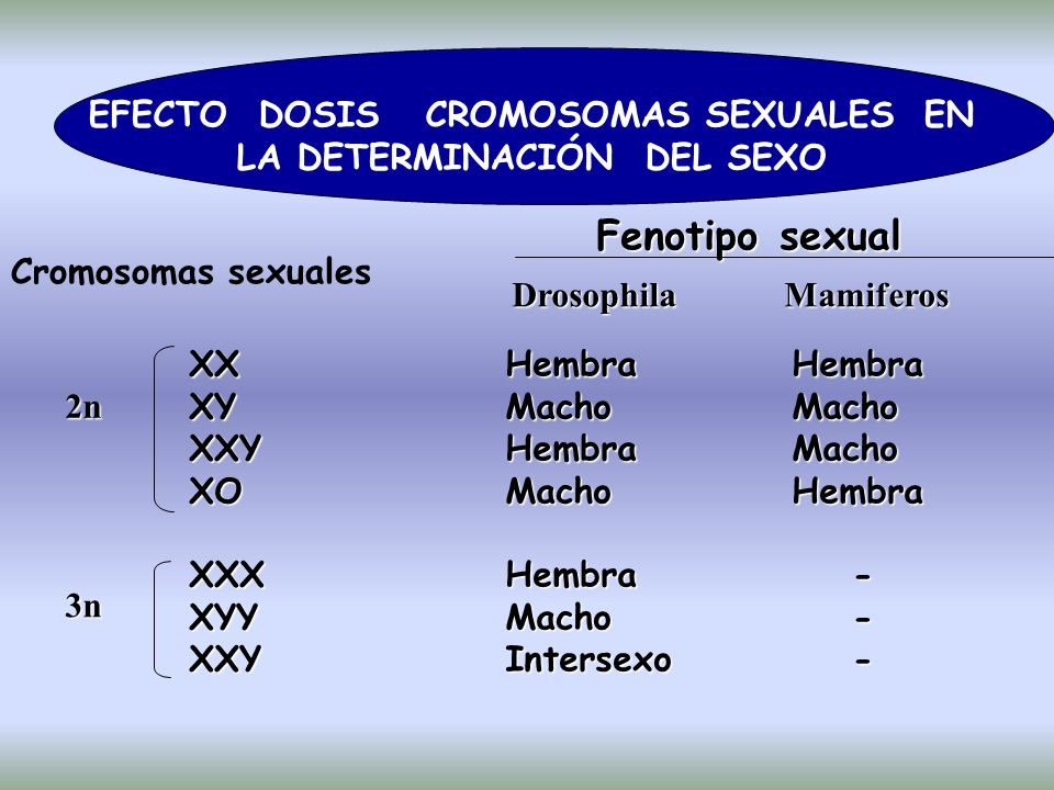 EFECTO DOSIS CROMOSOMAS SEXUALES EN LA DETERMINACIÓN DEL SEXO