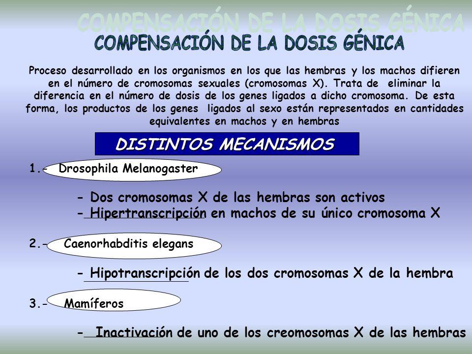 COMPENSACIÓN DE LA DOSIS GÉNICA