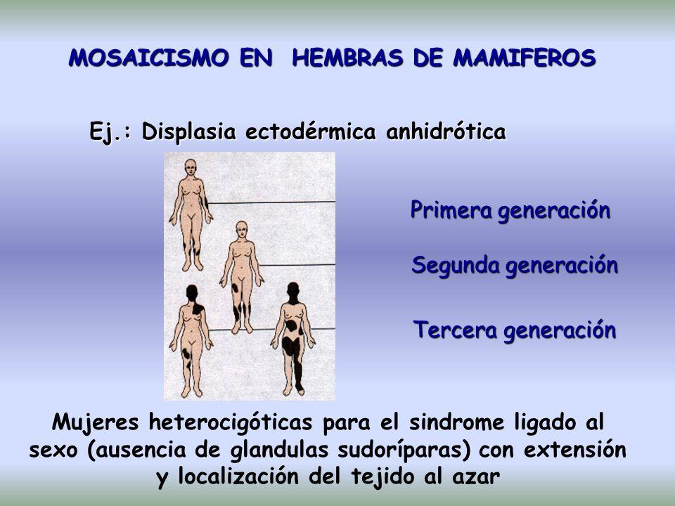 MOSAICISMO EN HEMBRAS DE MAMIFEROS