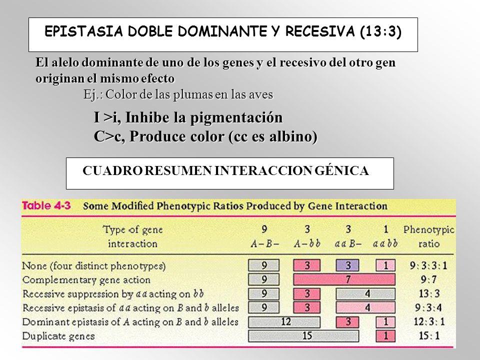 I >i, Inhibe la pigmentación C>c, Produce color (cc es albino)