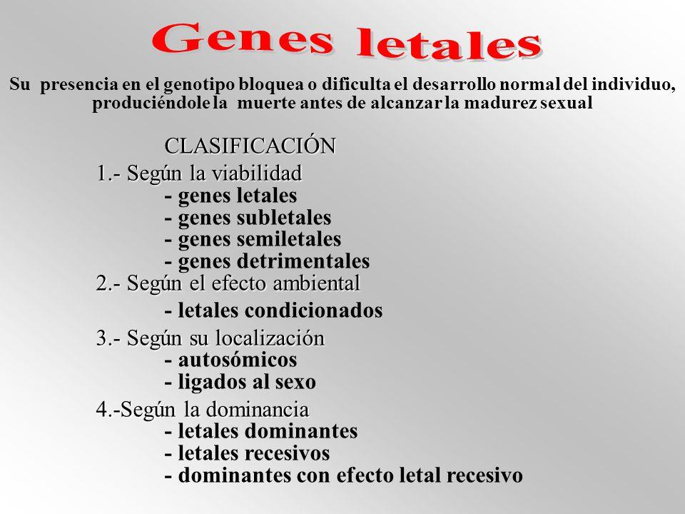Genes letales CLASIFICACIÓN 1.- Según la viabilidad - genes letales