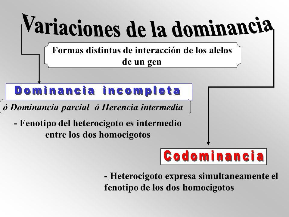 Variaciones de la dominancia