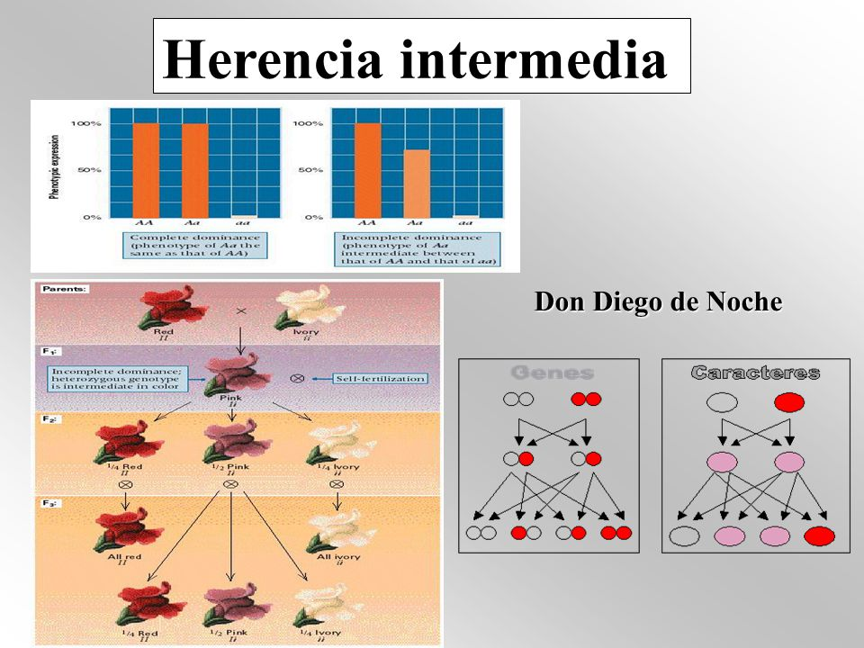 Herencia intermedia Don Diego de Noche