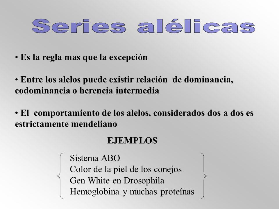 Series alélicas Es la regla mas que la excepción. Entre los alelos puede existir relación de dominancia, codominancia o herencia intermedia.