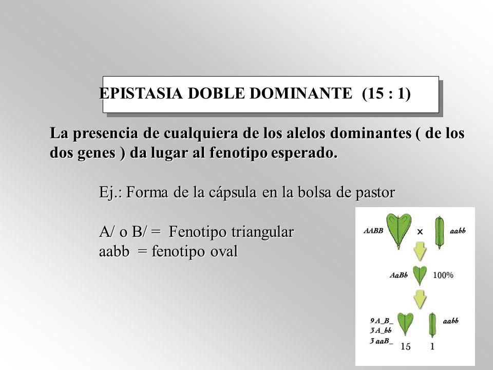 EPISTASIA DOBLE DOMINANTE (15 : 1)