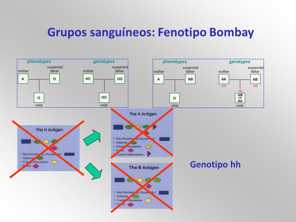 Grupos sanguíneos: Fenotipo Bombay