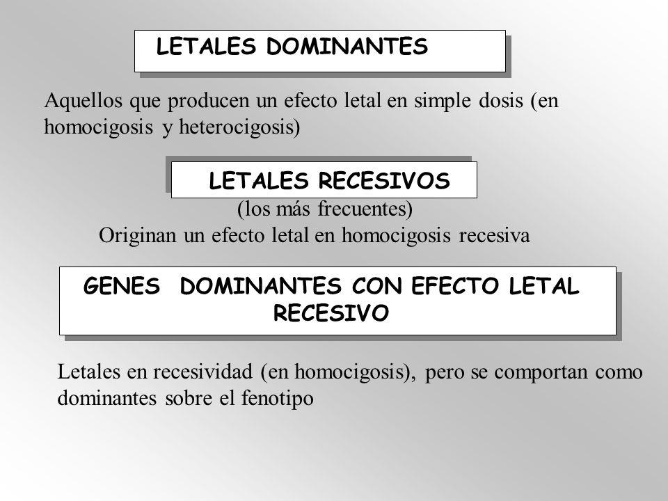 GENES DOMINANTES CON EFECTO LETAL RECESIVO