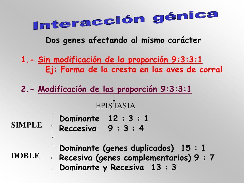 Interacción génica Dos genes afectando al mismo carácter. 1.- Sin modificación de la proporción 9:3:3:1.