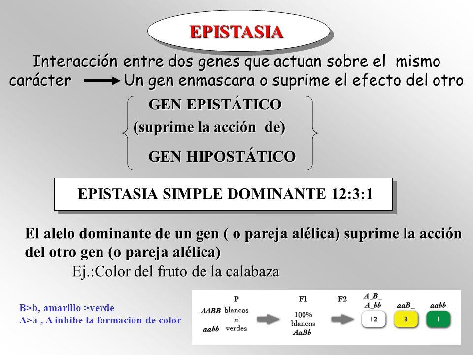 EPISTASIA Interacción entre dos genes que actuan sobre el mismo carácter Un gen enmascara o suprime el efecto del otro.