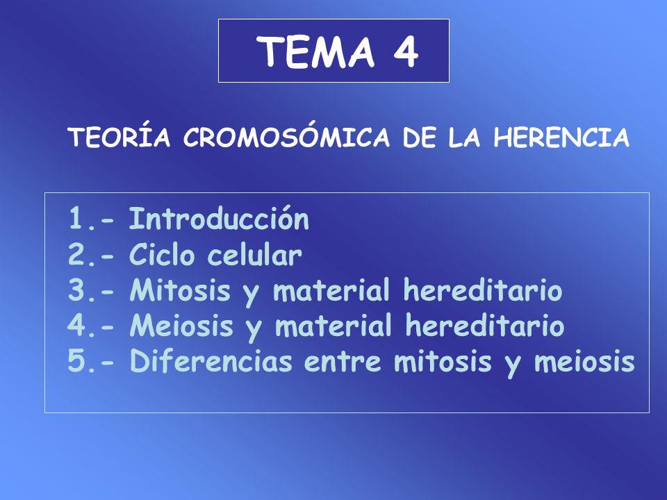 TEMA 4 1.- Introducción 2.- Ciclo celular