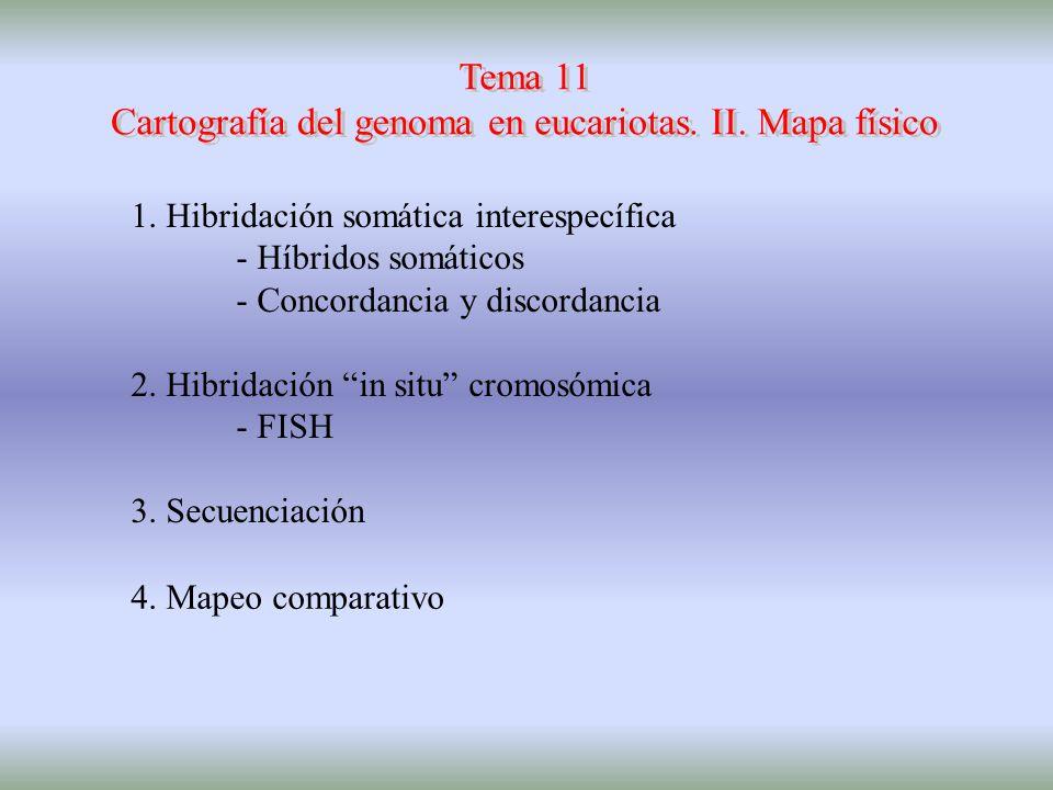 Cartografía del genoma en eucariotas. II. Mapa físico
