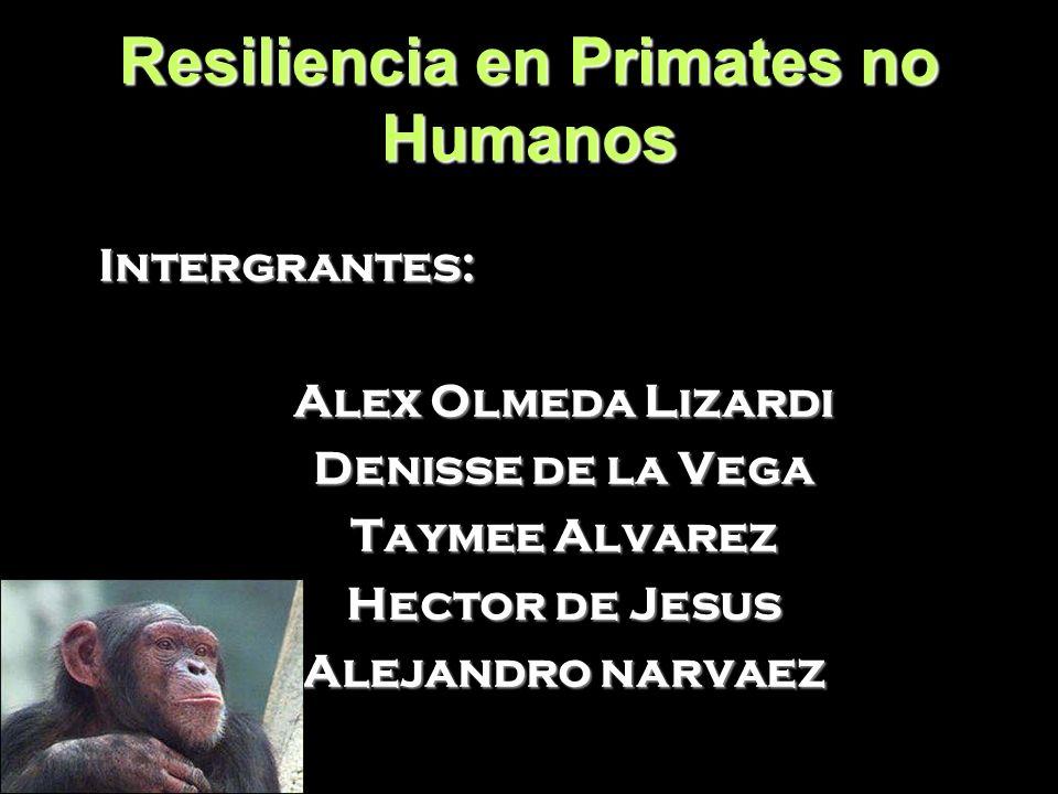 Resiliencia en Primates no Humanos