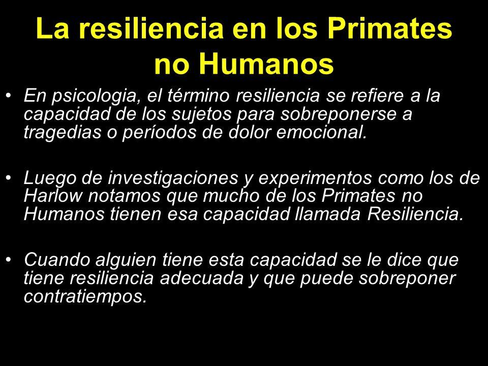La resiliencia en los Primates no Humanos
