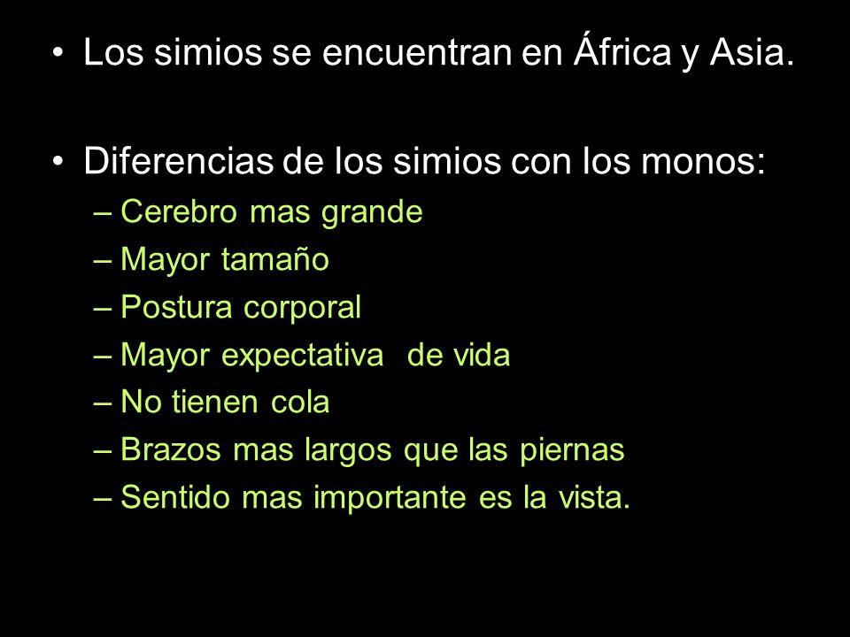 Los simios se encuentran en África y Asia.