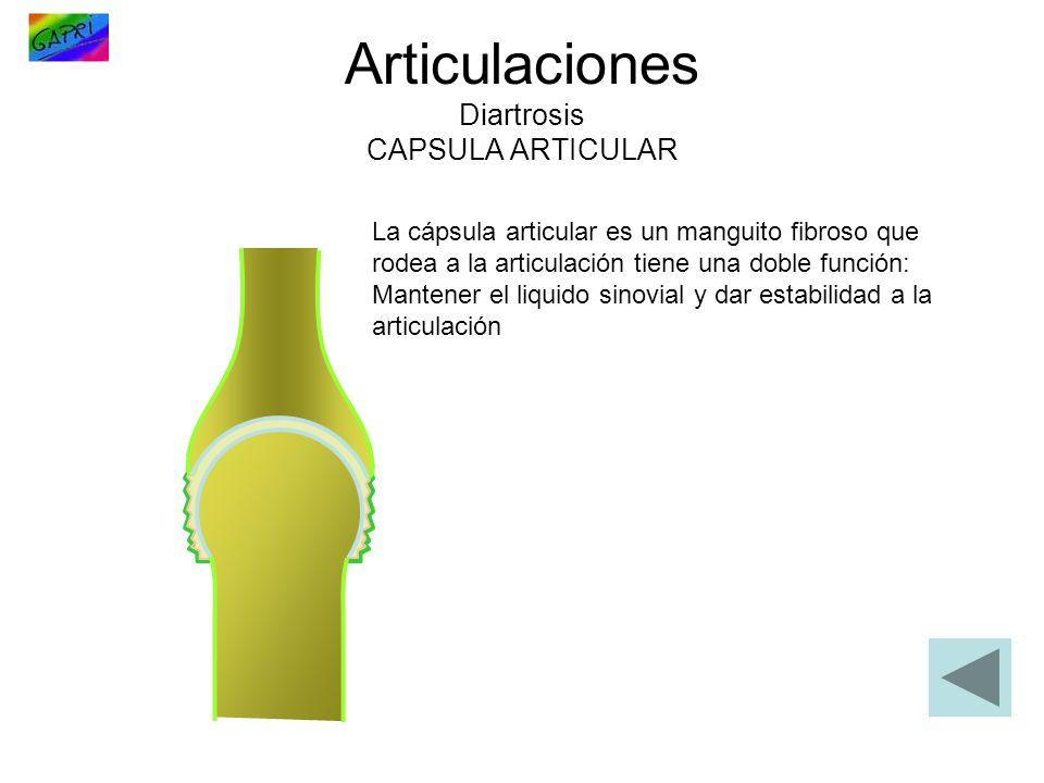 Articulaciones Diartrosis CAPSULA ARTICULAR