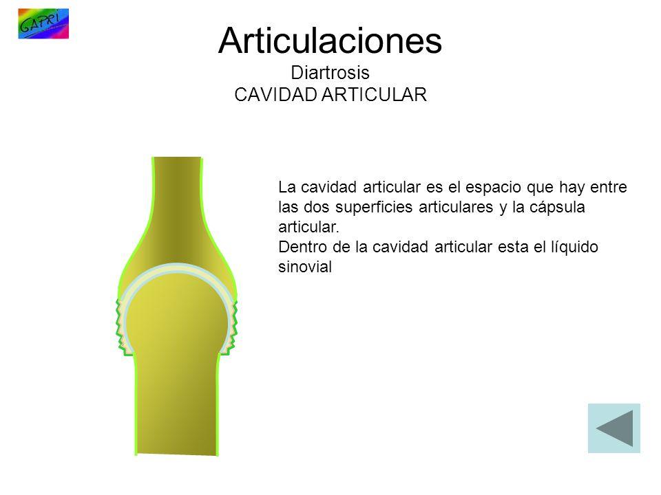 Articulaciones Diartrosis CAVIDAD ARTICULAR