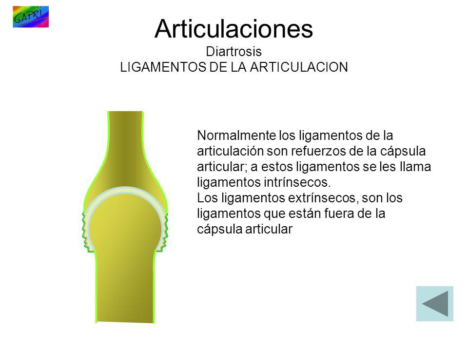 Articulaciones Diartrosis LIGAMENTOS DE LA ARTICULACION