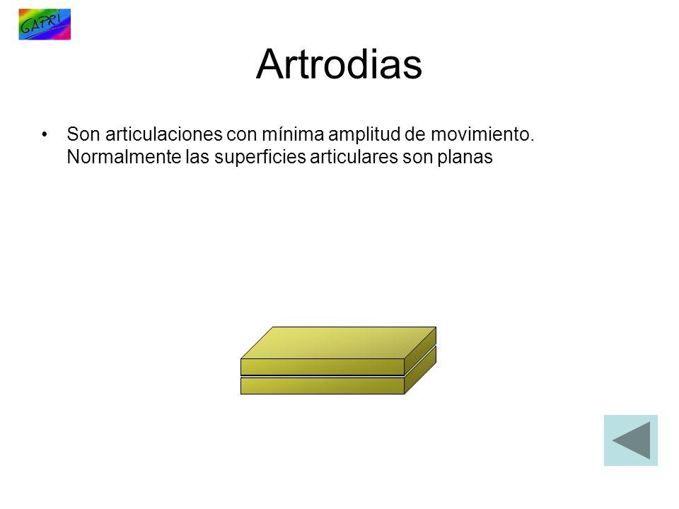 Artrodias Son articulaciones con mínima amplitud de movimiento.