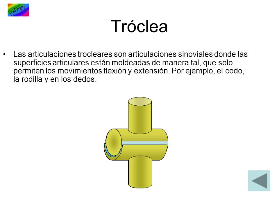 Tróclea