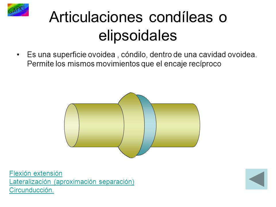 Articulaciones condíleas o elipsoidales