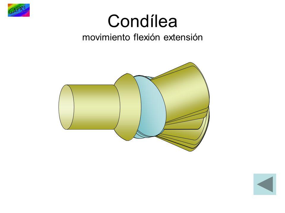 Condílea movimiento flexión extensión