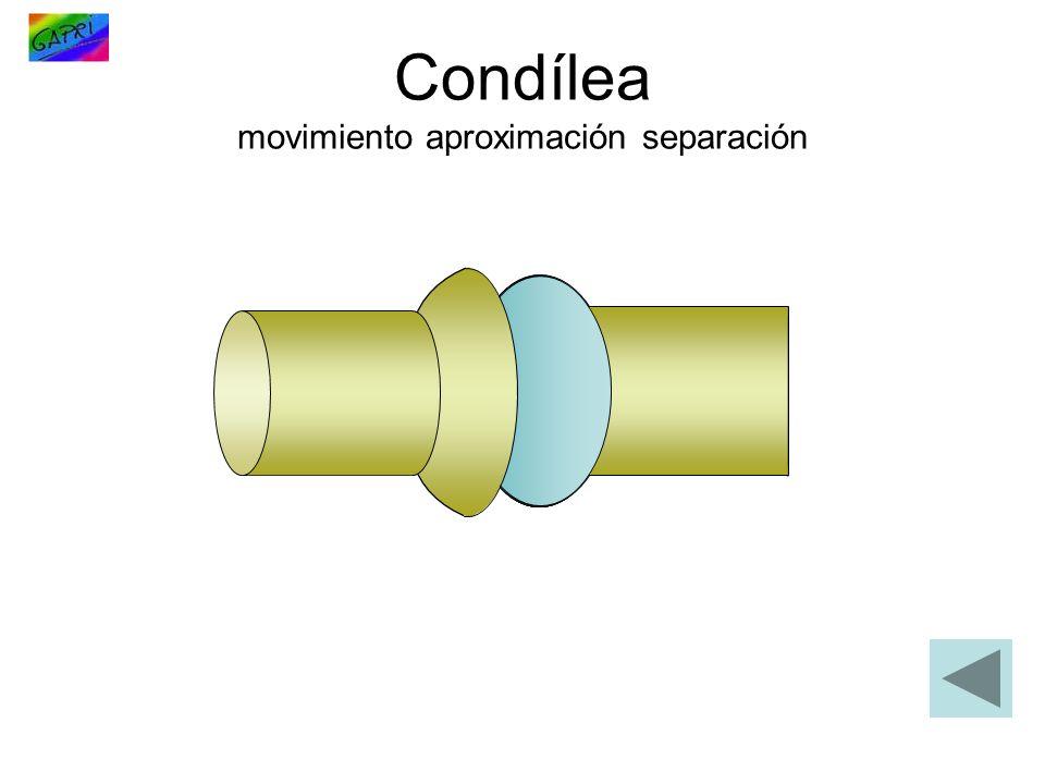 Condílea movimiento aproximación separación