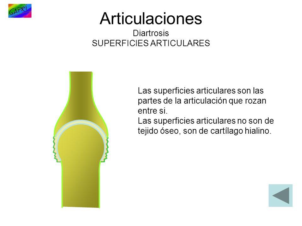 Articulaciones Diartrosis SUPERFICIES ARTICULARES