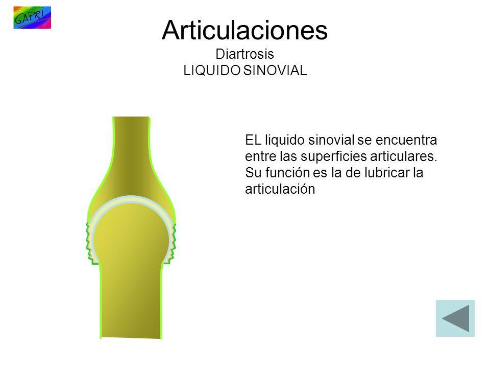 Articulaciones Diartrosis LIQUIDO SINOVIAL