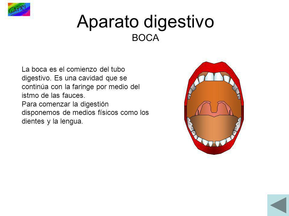 Aparato digestivo BOCA