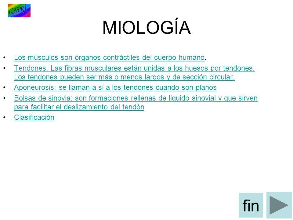 MIOLOGÍA fin Los músculos son órganos contráctiles del cuerpo humano.